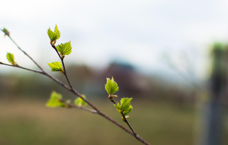 Photo wallpaper nature, sprig, branch, bokeh, razmytost