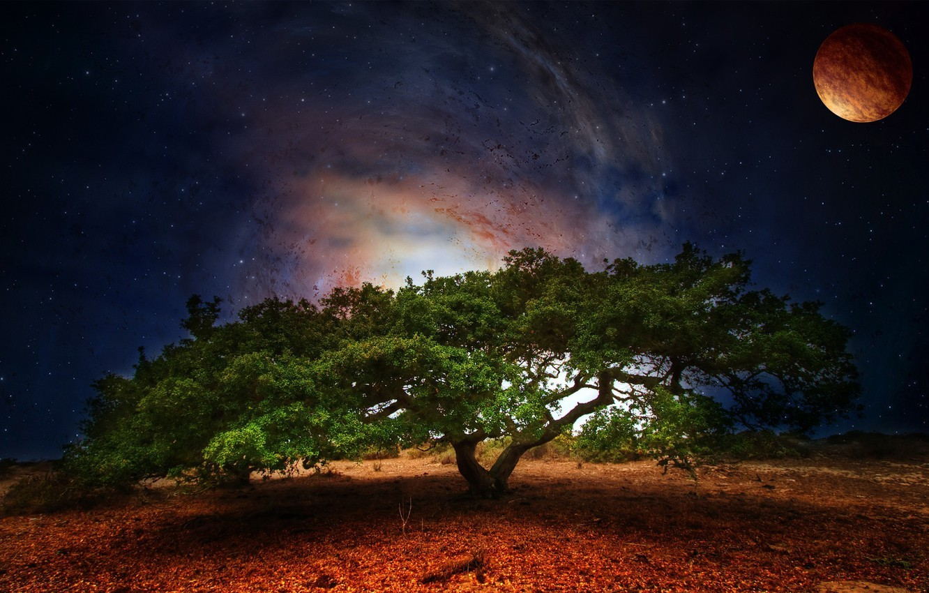 Photo wallpaper greens, space, stars, night, nature, tree, foliage, planet