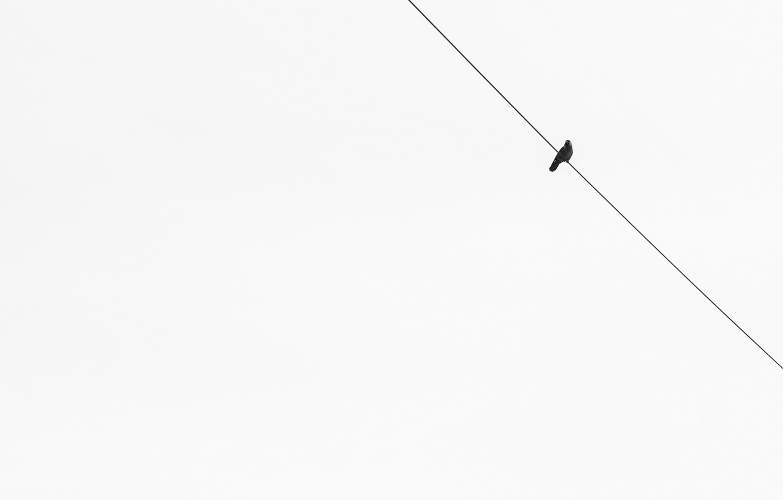 Photo wallpaper background, bird, minimalism