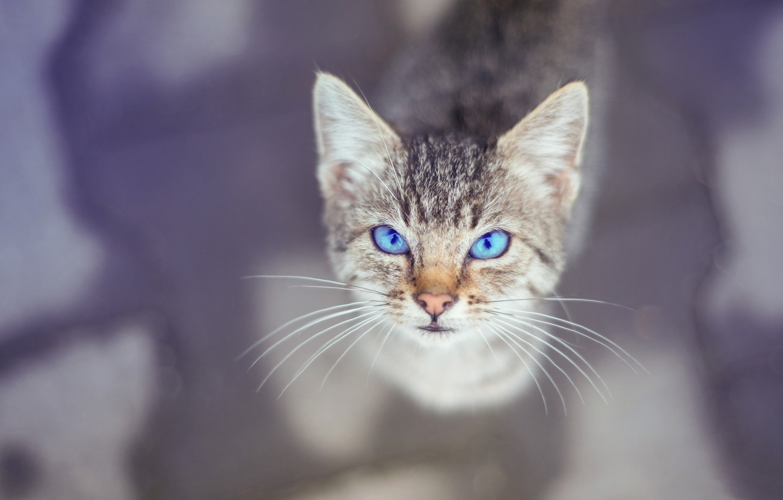 Photo wallpaper eyes, look, background, kitty, Kote