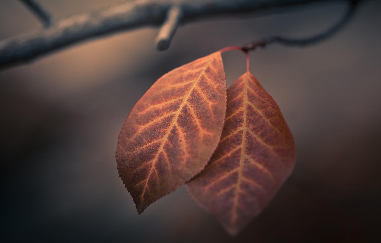 Photo wallpaper autumn, macro, foliage