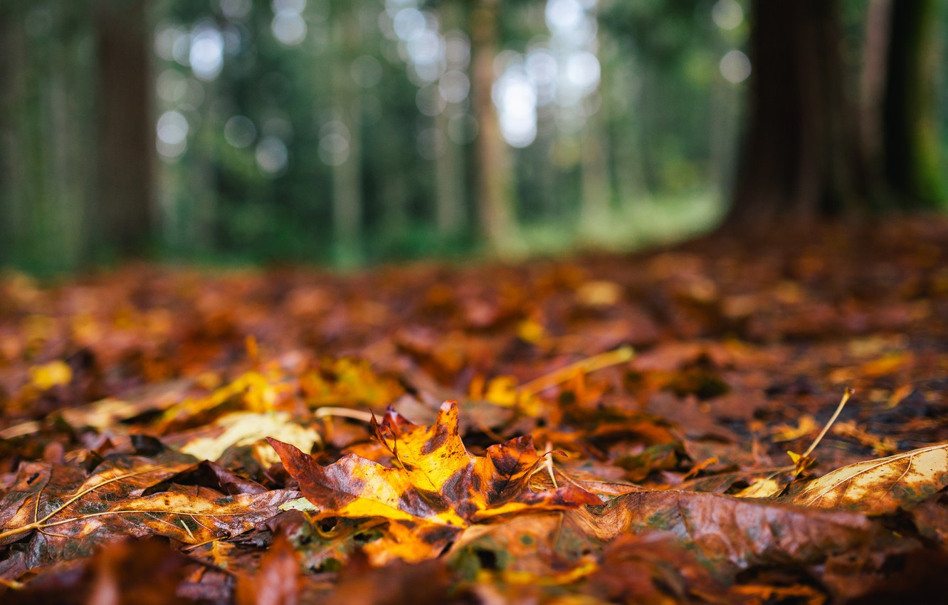 Photo wallpaper autumn, forest, leaves, macro, trees, nature, yellow, brown