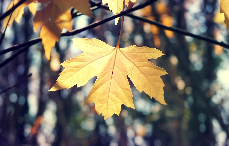 Photo wallpaper autumn, macro, branches, nature, sheet, maple