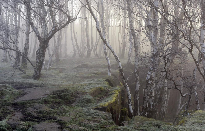 Photo wallpaper nature, fog, birch