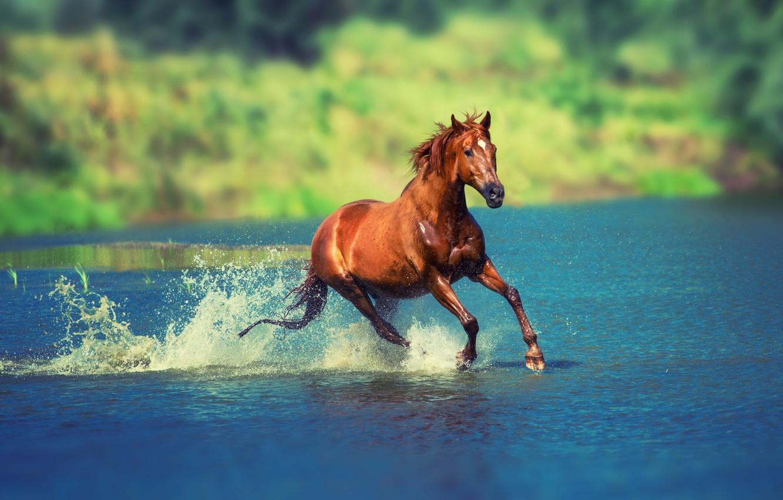 Photo wallpaper summer, water, the sun, squirt, nature, river, horse, horse, running, bokeh