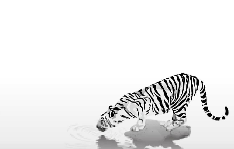 Photo wallpaper animals, easy, strips, tiger, black & white, black and white, caution, thirst