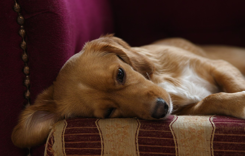 Photo wallpaper comfort, house, each, dog