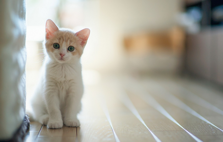 Photo wallpaper cat, light, house