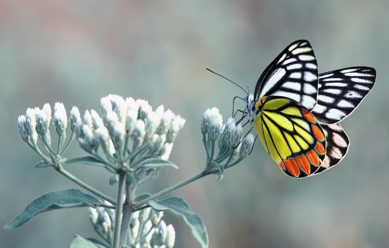 Photo wallpaper Orange, Flower, Black, White, Yellow, Butterfly, Leaves, Stalk, Paws, Fell, Antennae