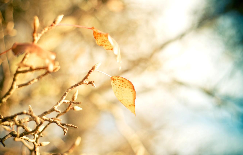 Photo wallpaper leaves, macro, trees, yellow, background, tree, widescreen, Wallpaper, blur, branch, wallpaper, leaves, yellow, widescreen, background, …
