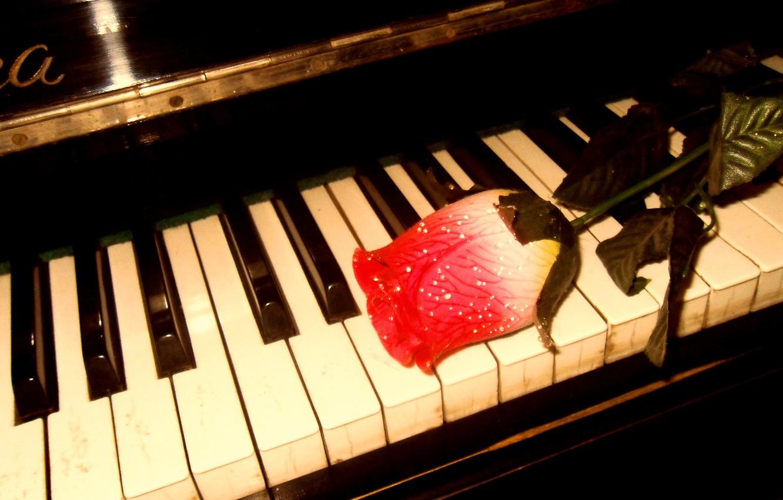 Photo wallpaper music, rose, piano