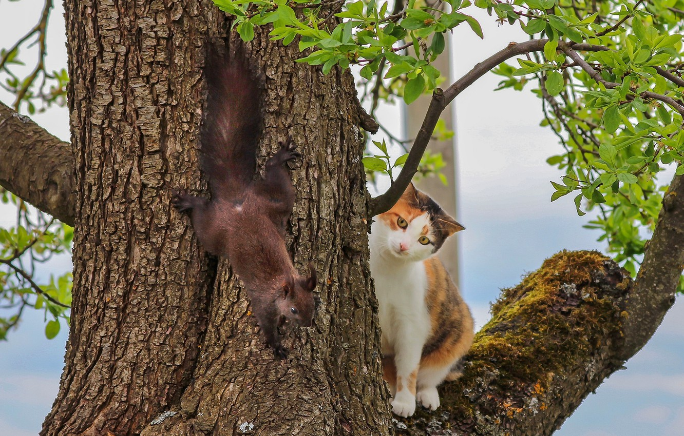 Photo wallpaper cat, tree, meeting, protein, on the tree