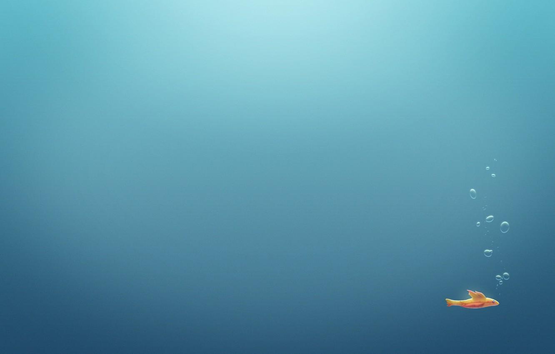 Photo wallpaper sea, water, fish, bubbles, the ocean, minimalism, fish, bubble, underwater, pools, aquariums