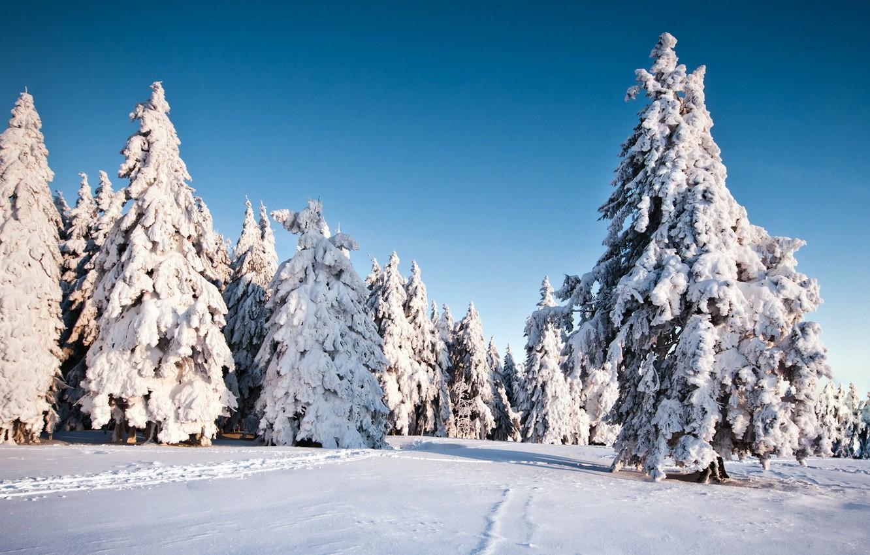 Wallpaper Winter Snow Trees Nature Background Wallpaper