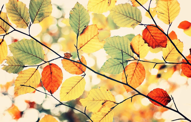 Photo wallpaper colors, sky, leaves, autumn, Colorful autumn