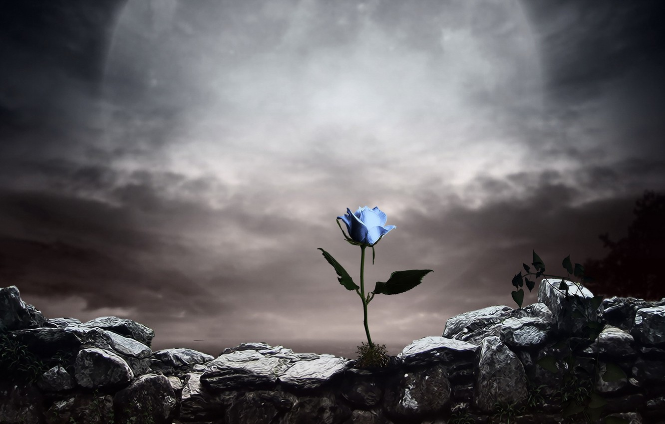 Photo wallpaper style, background, rose
