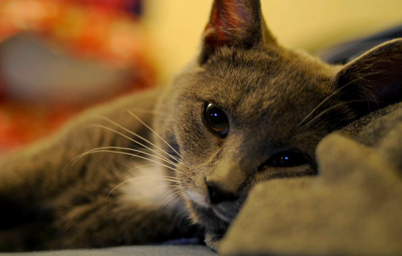 Photo wallpaper eyes, cat, mustache, lies, eyes, cat, lies, whiskers