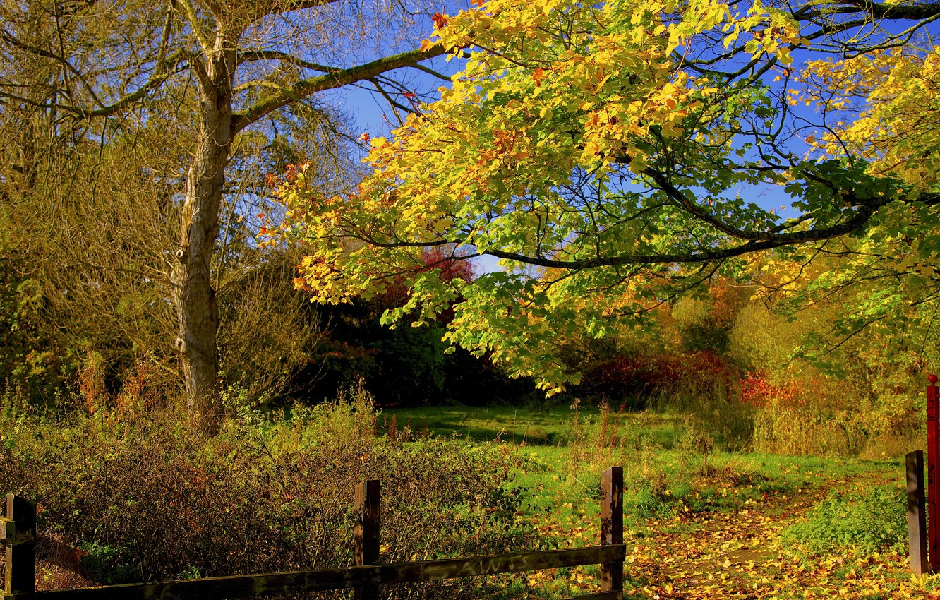 Photo wallpaper autumn, forest, the sky, leaves, trees, the fence, yard, track, path