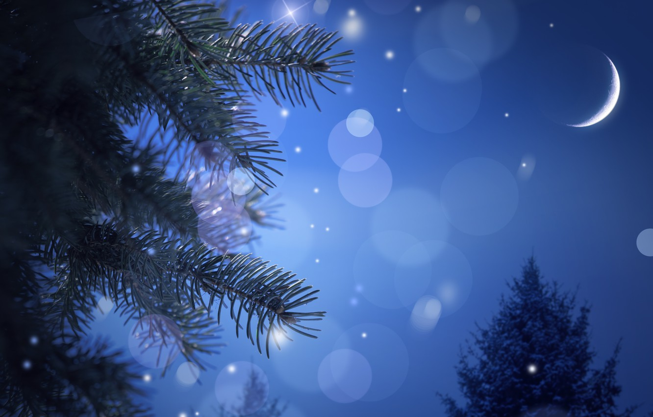 Photo wallpaper night, needles, tree, spruce, branch, a month, New Year, Christmas, bokeh