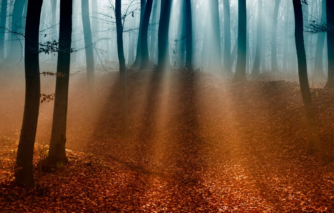 Photo wallpaper autumn, forest, leaves, light, trees, branches, fog