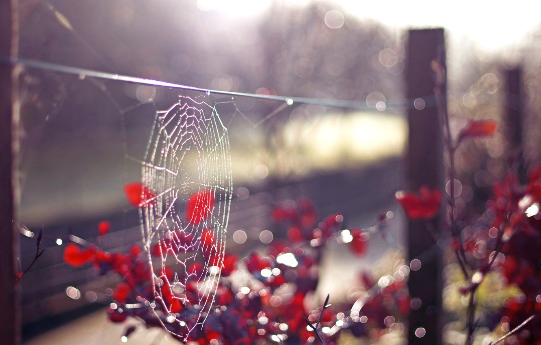 Photo wallpaper summer, the sun, rays, web