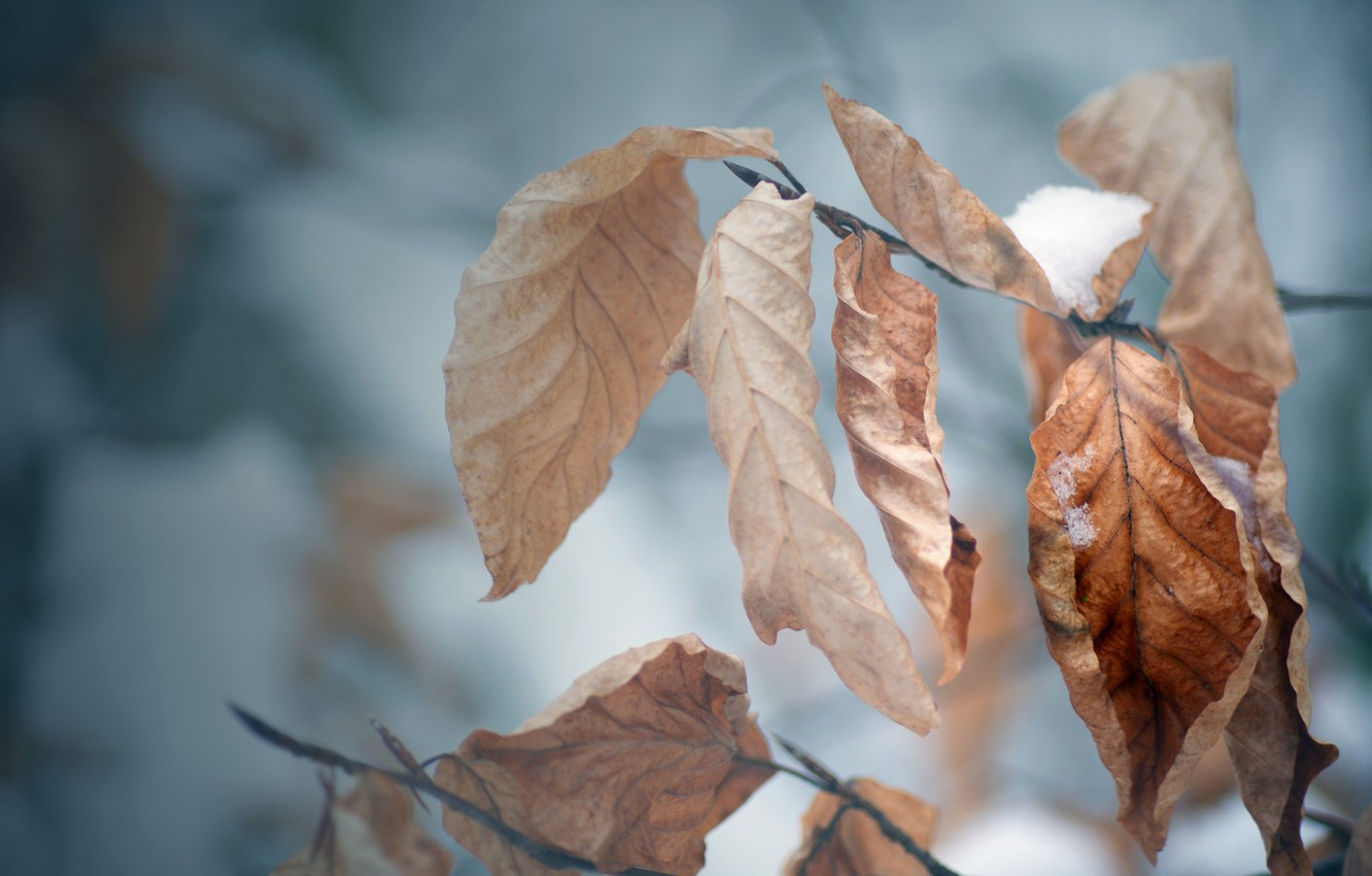 Photo wallpaper cold, winter, autumn, leaves, snow, tree, mood, branch, frost, macro Wallpaper, autumn Wallpaper, winter Wallpaper