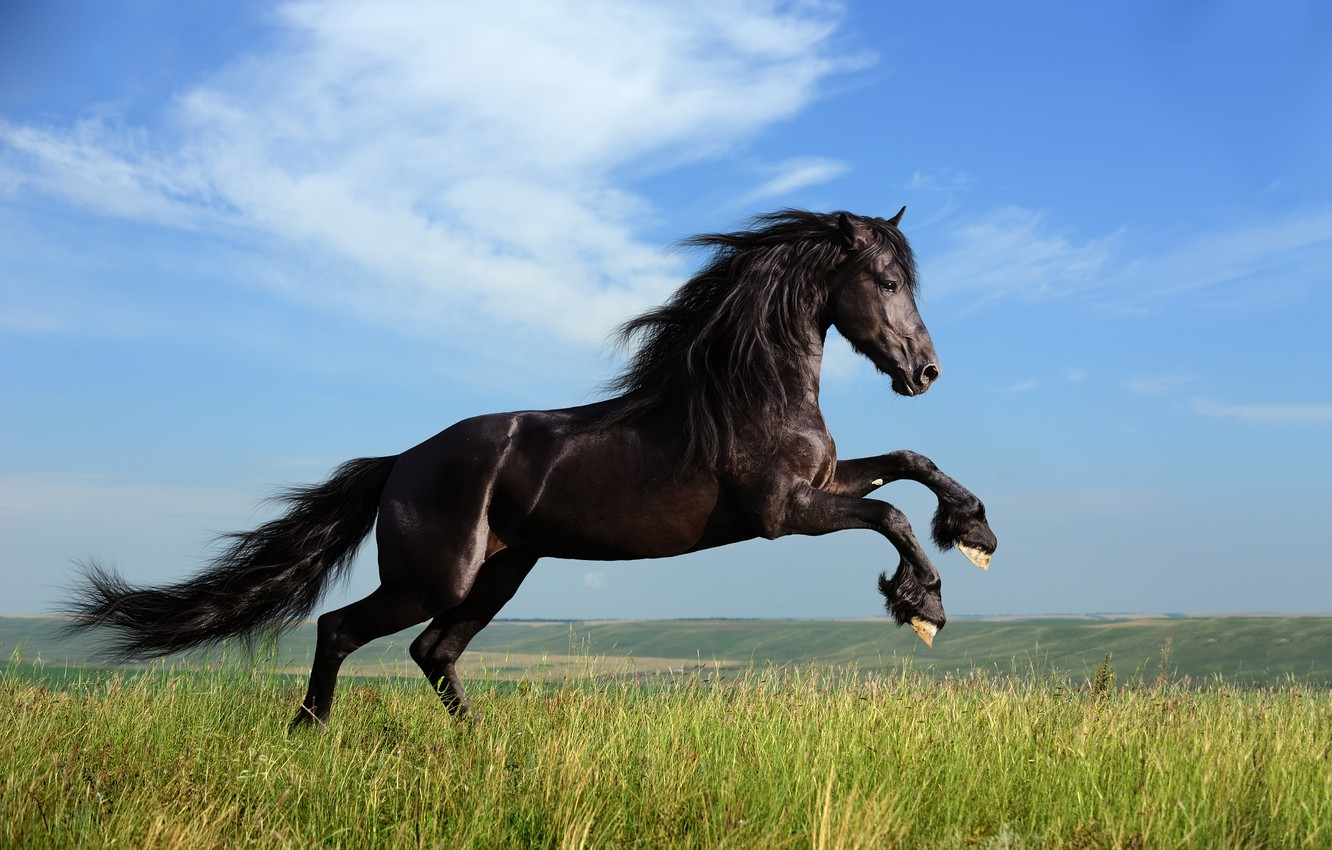 Photo wallpaper grass, freedom, clouds, horse, mane