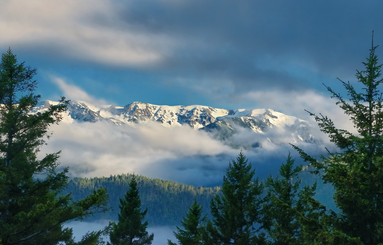 Photo wallpaper clouds, mountains, ate, Washington, Washington, Olympic National Park, Olympic Mountains, Hurricane Ridge, ridge Olympic, Olympic …