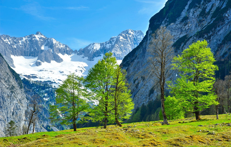 Photo wallpaper greens, grass, trees, landscape, mountains, nature, Austria, Tyrol