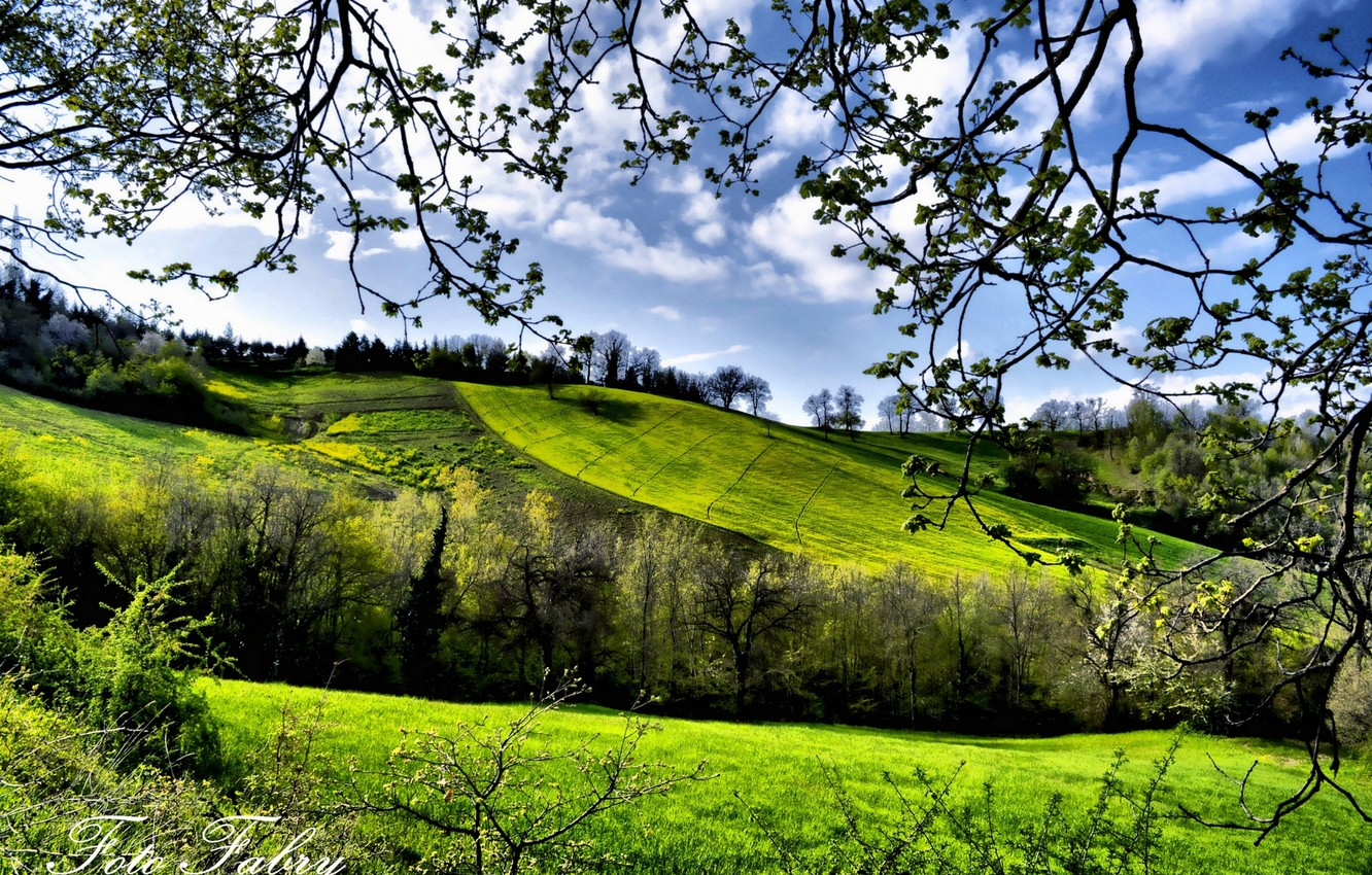Wallpaper Trees Fields Spring Greenery Images For Desktop