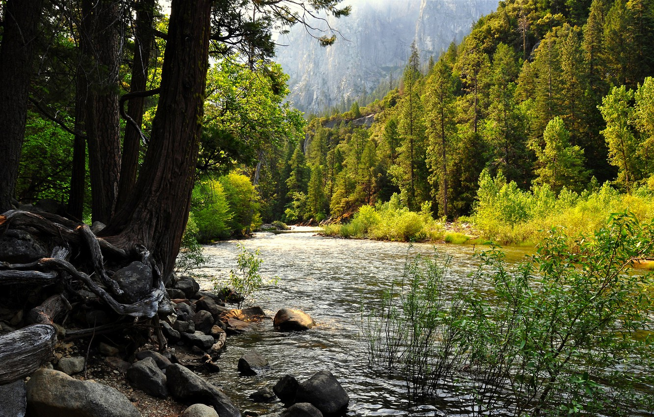 Photo wallpaper forest, trees, mountains, river, rocks, stones.