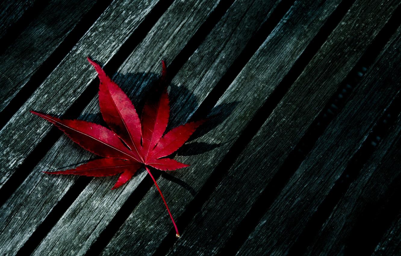 Photo wallpaper red, sheet, tree