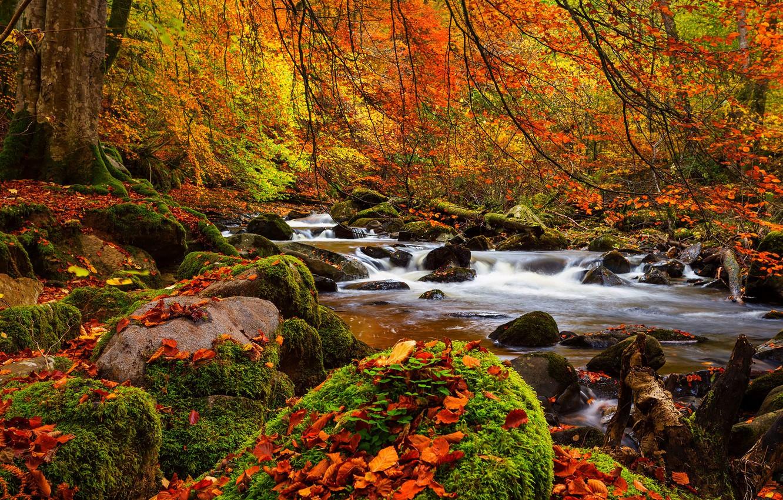 Photo wallpaper forest, trees, landscape, Nature, forest, river, trees, landscape, nature, autumn, view, scenery, autumn