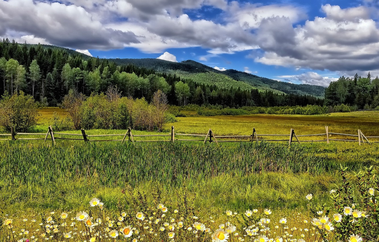Photo wallpaper clouds, trees, flowers, mountains, the fence, chamomile, meadow