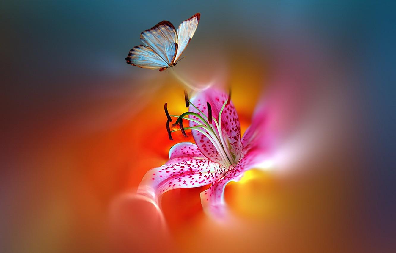 Photo wallpaper flower, butterfly, paint, styling, beautiful, bright, motley, Josep Sumalla