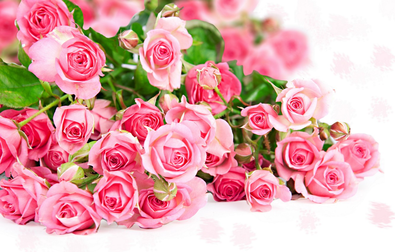 Photo wallpaper photo, Flowers, Pink, Roses, A lot