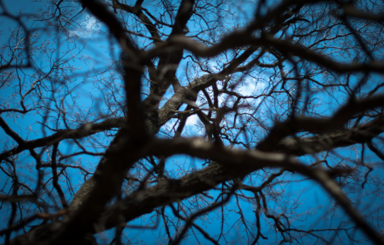 Photo wallpaper the sky, light, branches, tree, Wallpaper, web, depth, spring, wallpaper, sky, nature, tree, spring, web, …
