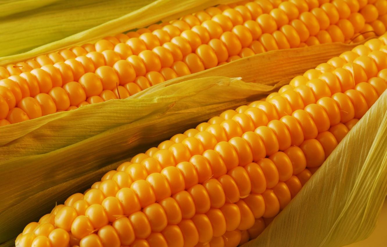 Photo wallpaper leaves, the cob, Corn