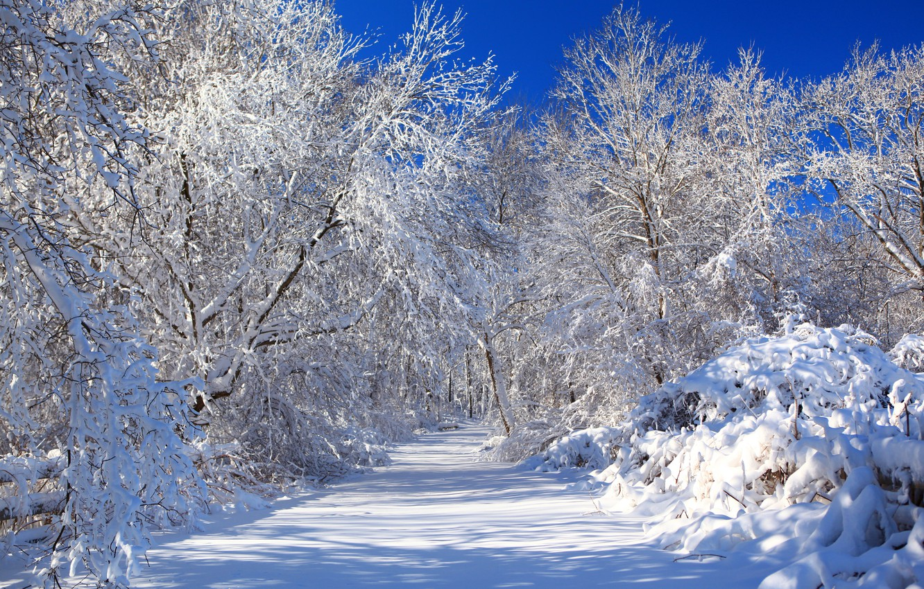 Photo wallpaper winter, road, the sky, snow, trees, nature