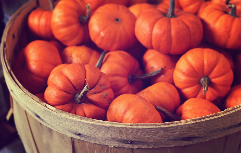 Photo wallpaper color, photo, Wallpaper, basket, bright, food, pumpkin