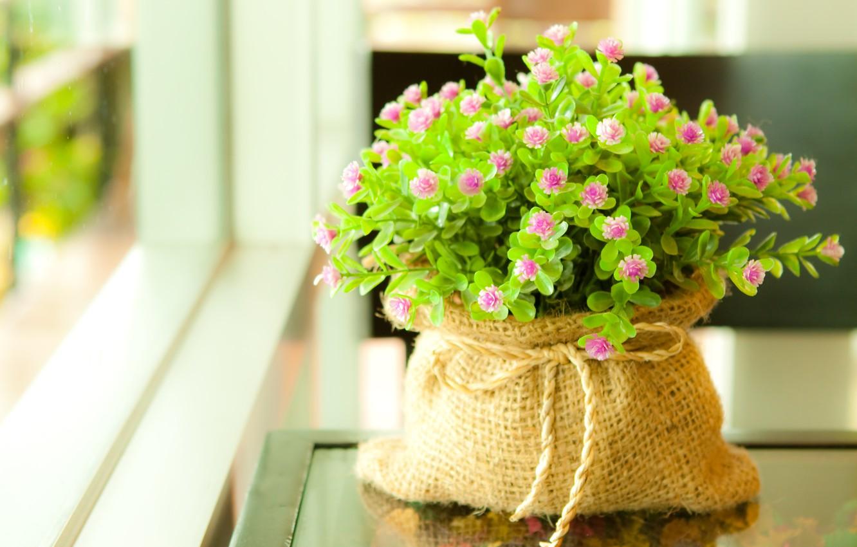 Photo wallpaper greens, leaves, macro, flowers, plant