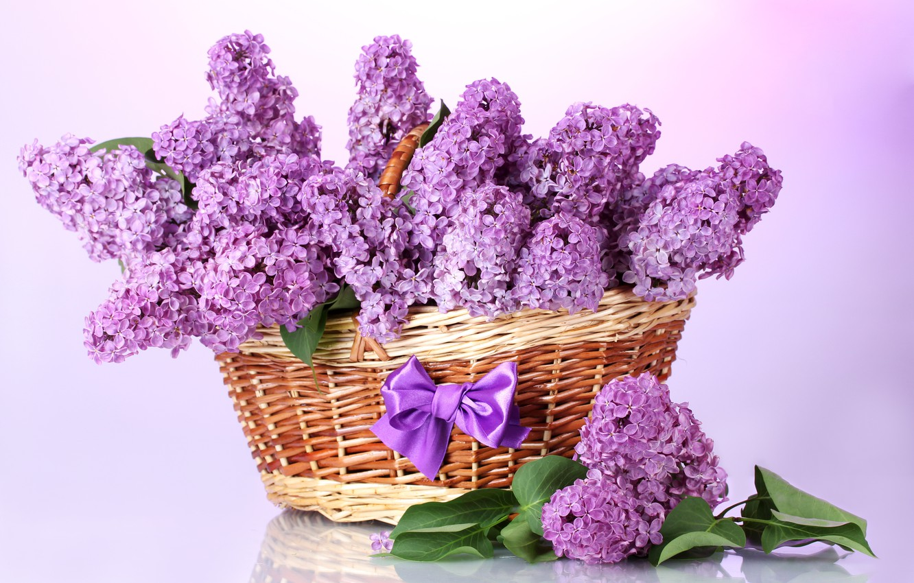Photo wallpaper purple, leaves, flowers, branches, basket, spring, bow, lilac