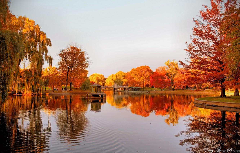 Photo wallpaper autumn, trees, lake, reflection, gazebo