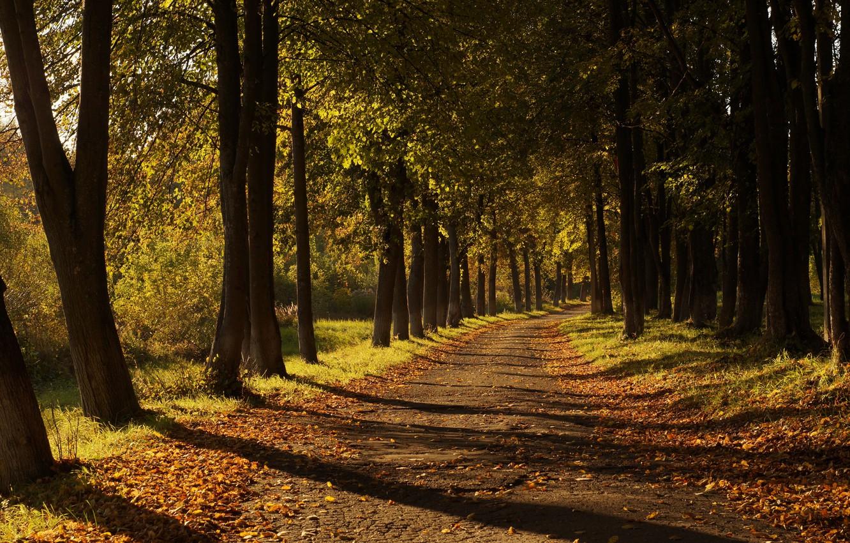 Photo wallpaper road, autumn, leaves