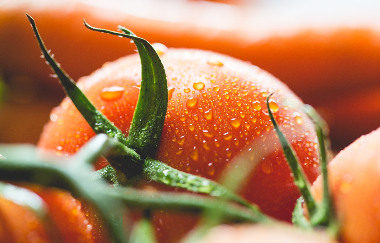 Photo wallpaper drops, tomato, tomato, vegetable