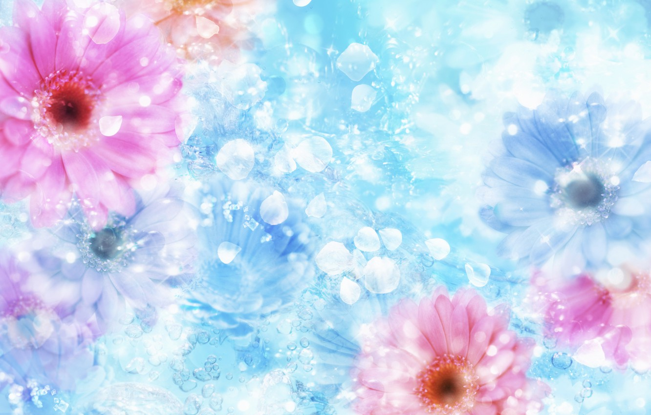 Photo wallpaper flower, water, the reflection