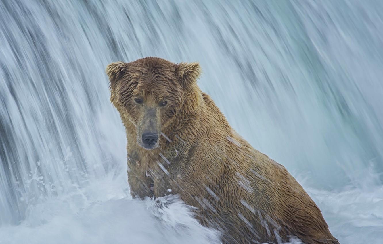 Photo wallpaper waterfall, bear, Alaska, bathing, Alaska, Katmai National Park, The Katmai national Park, Brooks Falls