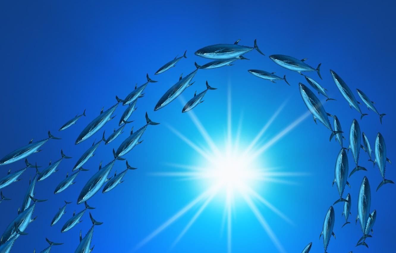 Photo wallpaper the sun, blue, fish, Cant