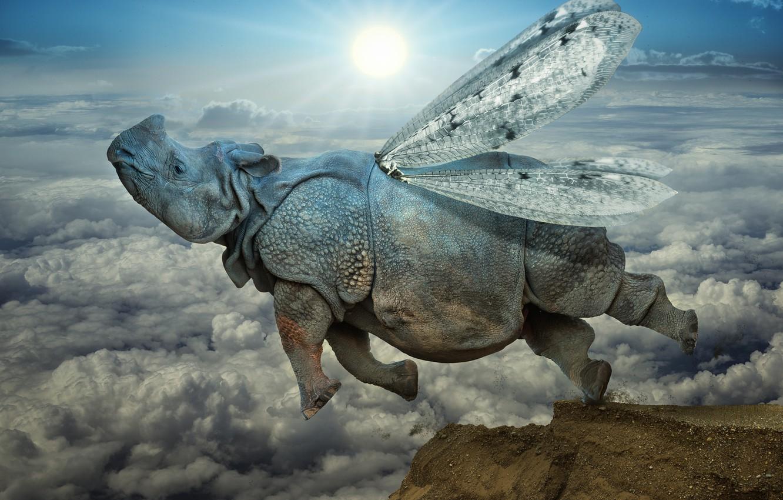 Photo wallpaper clouds, jump, wings, Rhino