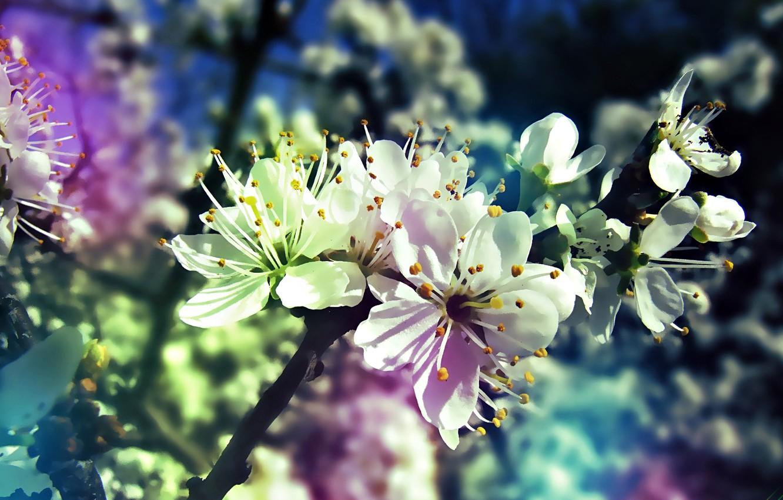 Photo wallpaper tree, gradient, spring